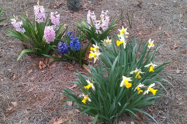 springy flowers