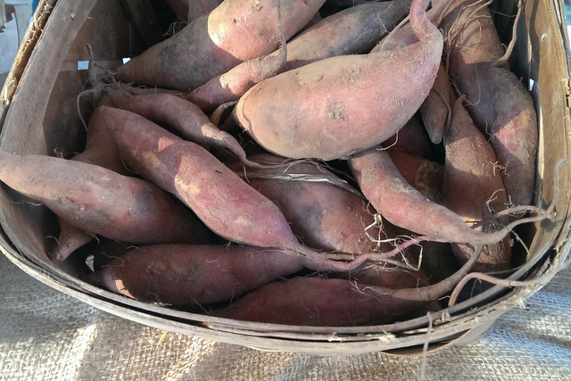 sweet potatoes from mealors