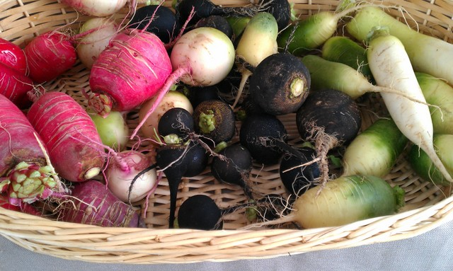 basket of le tre lune radishes