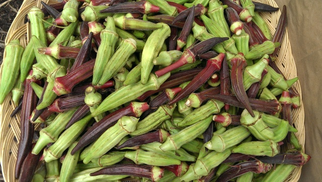 okra at EAV famers market