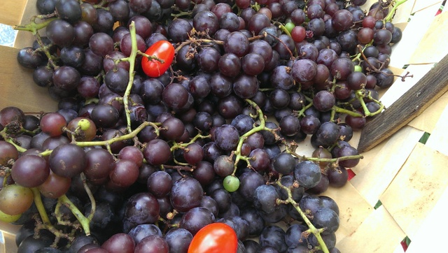 loads of concord grapes